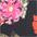blümchen-rosa-schwarz